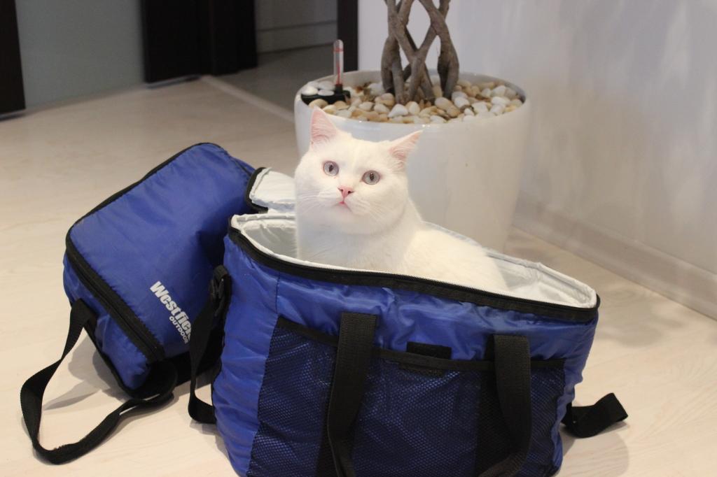 Подготовка к поездке в Черногорию 2014