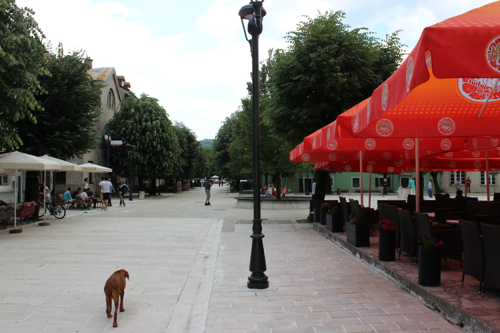 Собака идет по улице в Цетинье
