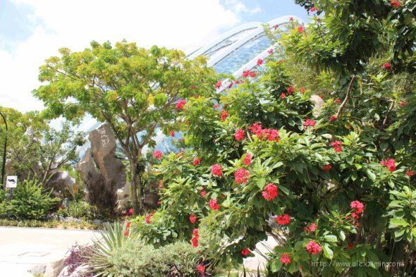 возле оранжереи в садах GARDENS BY THE BAY. Сингапур