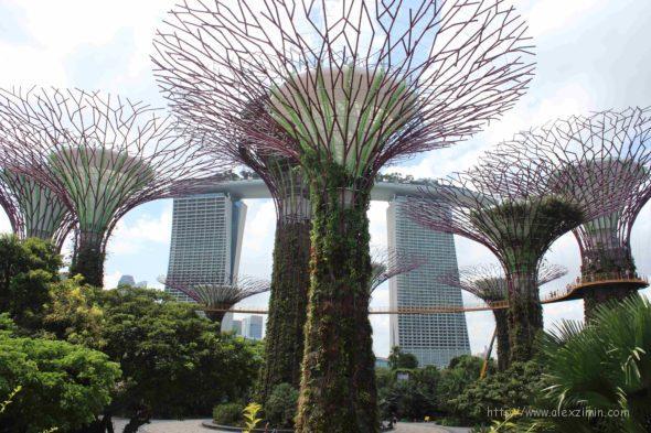 гигантские деревья в сингапуре