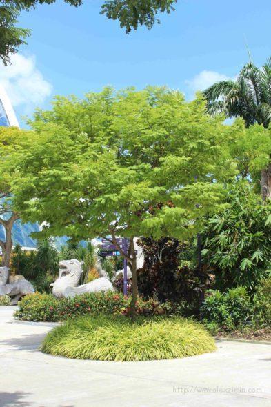 дерево возле оранжереи в садах у залива в сингапуре