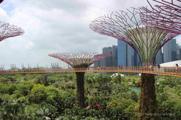 деревья будущего в садах у залива