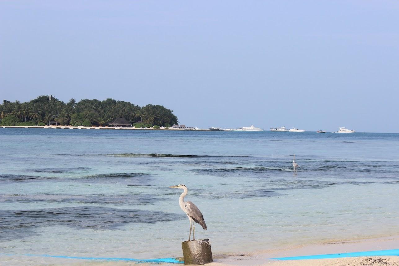 Пляж на острове Рашдо