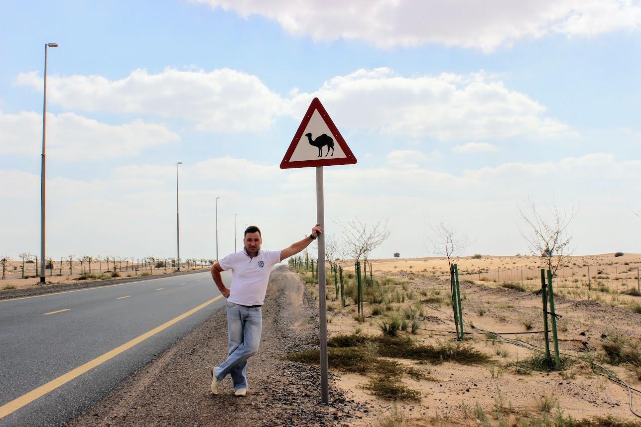 Дорожный знак в Эмиратах - Острожно! Верблюды