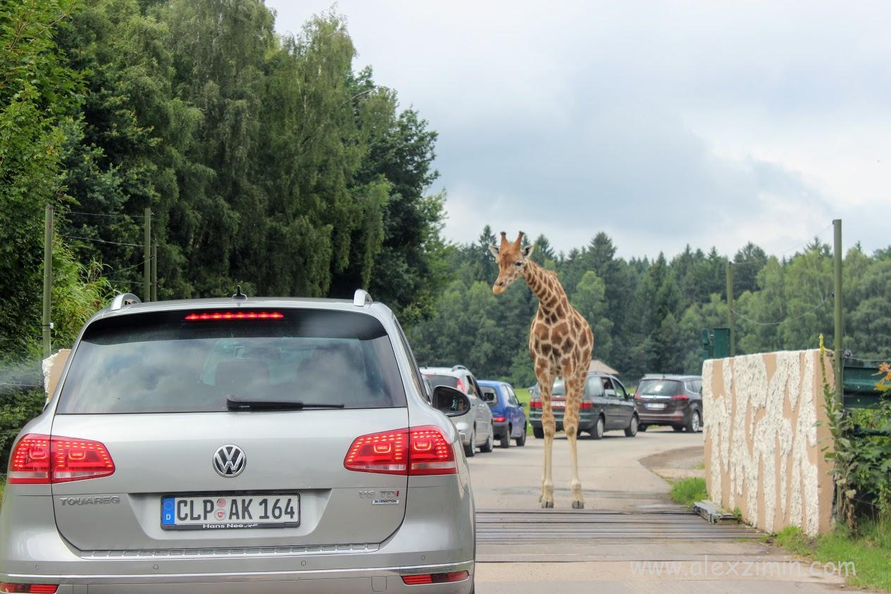 Аренда авто в Германии. Сафари-парк Серенгети