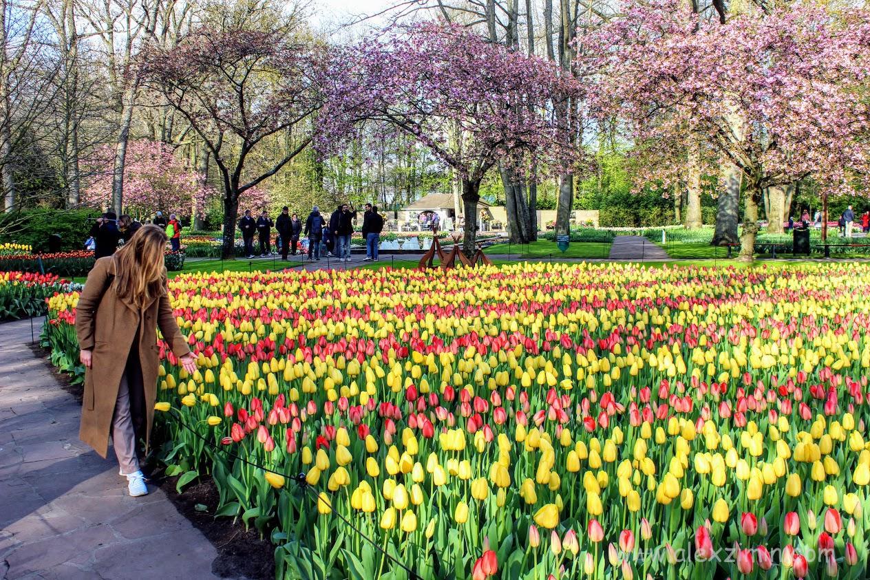 Тюльпаны в Голландии. Парк Кекенкофф